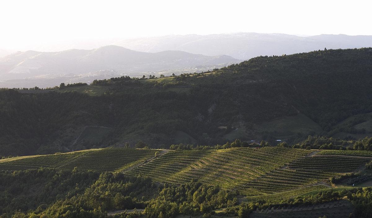 Wine Secrets Croatia